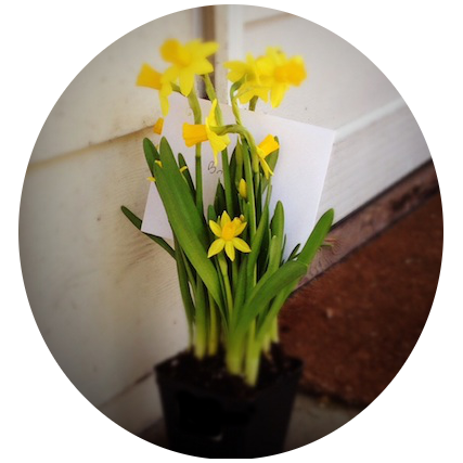 daffodils on porch circle